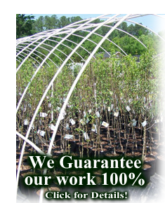 Guaranteed Nursery and  Landscape Service in Durham, Chapel Hill, Raleigh and beyond.
